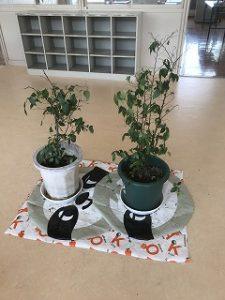 エノキの植木
