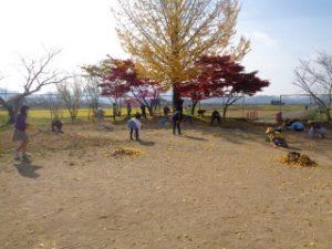 4年生は銀杏の木の周りの葉を集めました。